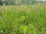 prairie-naturelle-visoflora-55421.jpg