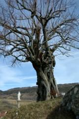 vieil arbre.jpg