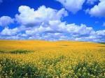 prairie-ciel-bleu.jpg