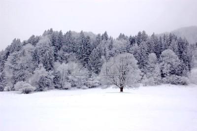 Noel blanc.jpg